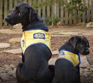canine-companions