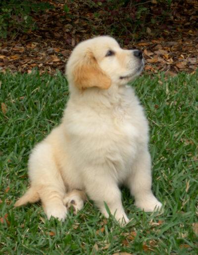 Baron as a puppy