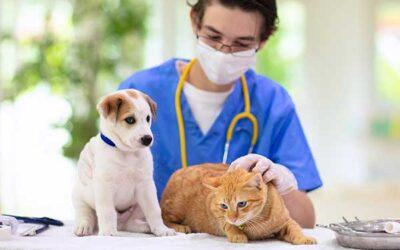 Ultimate Pet Insurance Checklist